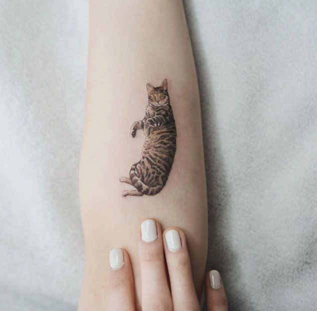tatuagem realista pequena de gato